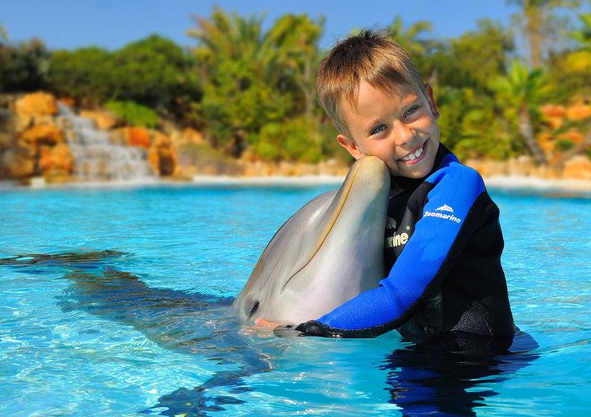 Dolphins Experience