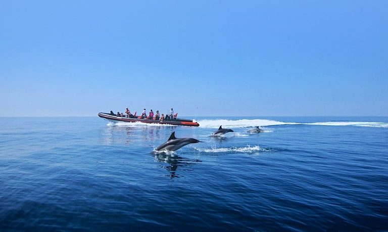 Dolphin and caves boat trip in Vilamoura