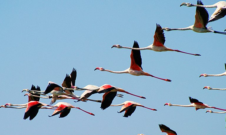 Birdwatching in Olhão