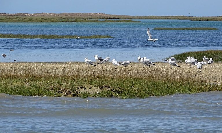 Tour from Faro to Ria Formosa