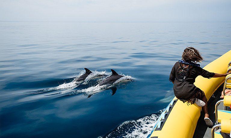 Dolphin tour in Lagos