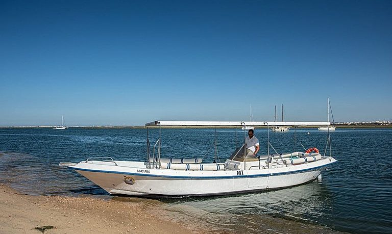Ria Formosa birdwatching tour on a solar boat