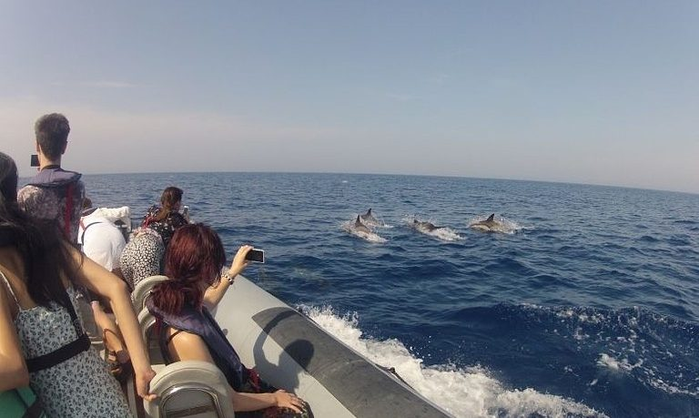 Dolphin watching from Faro